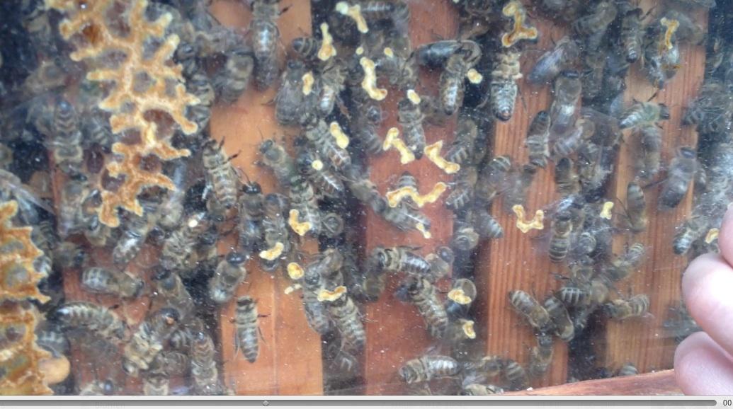 warmbau oder kaltbau bei bienen und bienen beuten imkerpate. Black Bedroom Furniture Sets. Home Design Ideas